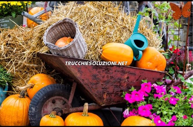 Soluzioni 1 Pic 8 Words Livello 23